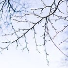 Frozen branches by MorganaPhoto