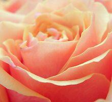 Peach Beauty by Tjfarthing