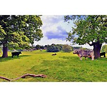 The English Countryside Photographic Print