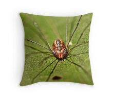 daddy longlegs resting Throw Pillow
