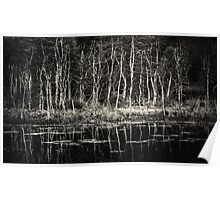 Trees by a Pond Poster