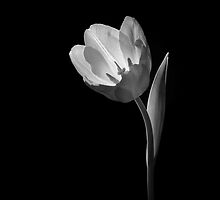 Flower in B&W 09 by Paul Croxford