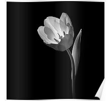 Flower in B&W 09 Poster