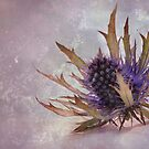 Prickly by Nicole W.