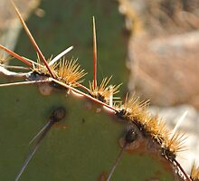 Cactus by ShutteredPieces