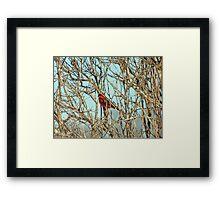 Cardinal I Framed Print