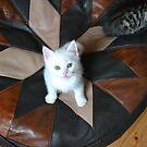 Cat by Ziva Javersek
