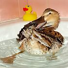 Who Needs a Rubber Ducky......... by Susan Freeman