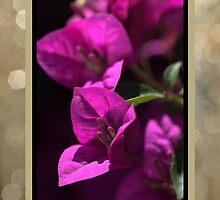 Thank You - Bougainvillea Flowers by Joy Watson