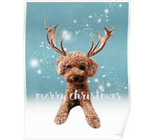 Merry Christmas Poodle Poster
