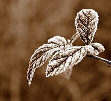 Frozen by MichelleAyn