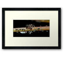 Ants and Aphids Framed Print