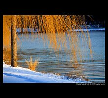 Salix Nigra - Black Willow Tree By The Spring Lake  by © Sophie W. Smith