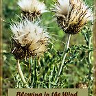 Dried Bull Thistle in the Wind by laxwings