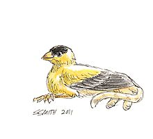 Sketch -- Mythological House Griffin: Goldfinch Variety Photographic Print