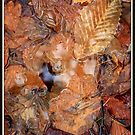 Leaf Puddle by Mikell Herrick