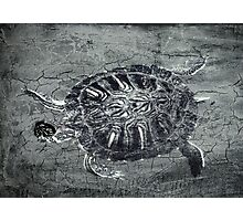The One-Eyed Turtle Photographic Print