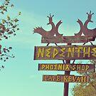 Nepenthe by Kristin Kenney