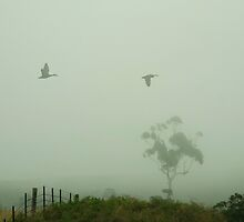 On a cloudy, misty, Dorrigo day - I couldn't tell if they were Ducks or Geese by Clare Colins