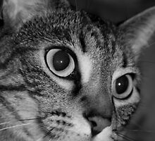 Beautiful Cat in Black and White by Sherry Hallemeier