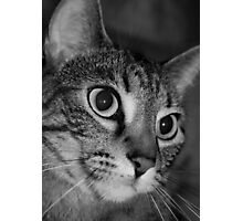Beautiful Cat in Black and White Photographic Print