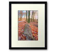 Details of an enchated forest III Framed Print