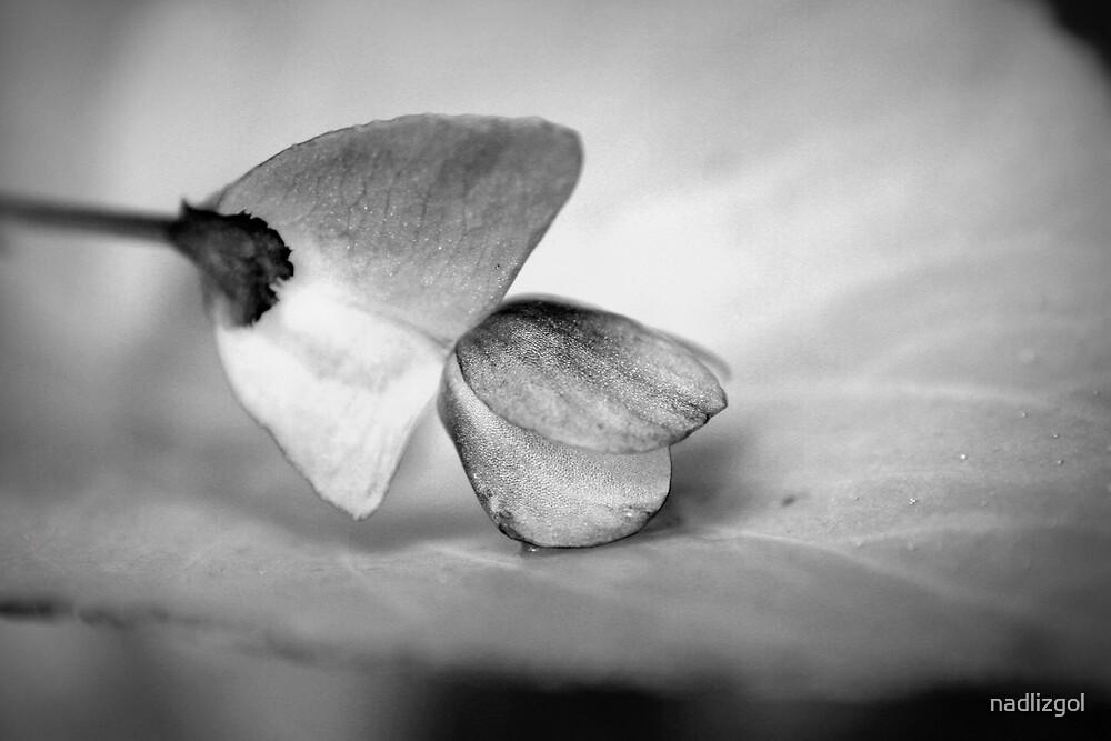 Oriental flower by nadlizgol