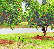 Oranges and robins by ♥⊱ B. Randi Bailey