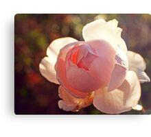 Backlit Rose Metal Print
