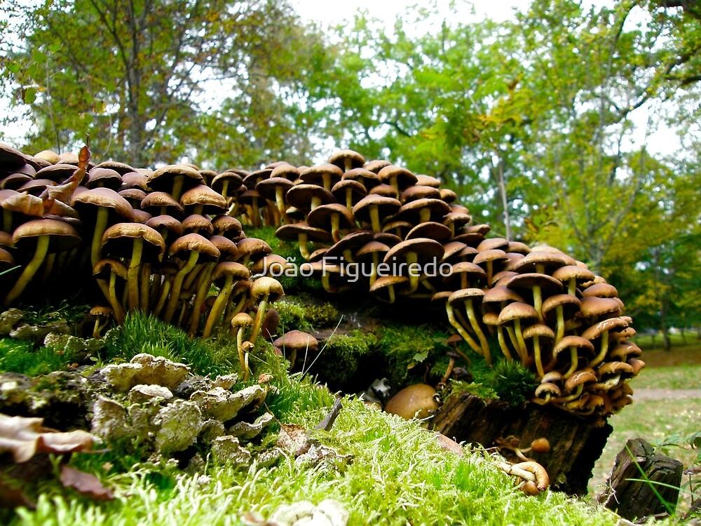 Mushroom metropolis by João Figueiredo