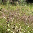 Grass straws by HuntrRose