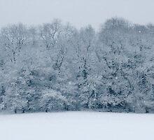 January Snow by missmoneypenny