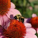 Busy Bee 1 by d1373l