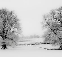 Snowy Twins (Large) by SwampDogPhoto