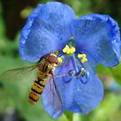 Hoverfly and flower by elsiebarge