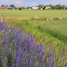 Colourful countryside by christopher363