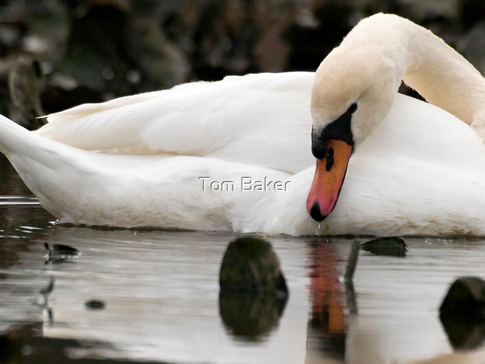 Silence On Mute by Tom Baker