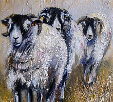 Swaledale Walk by Sue Nichol
