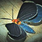 Damp White-tipped black moth by ♥⊱ B. Randi Bailey
