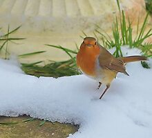 Robin by relayer51