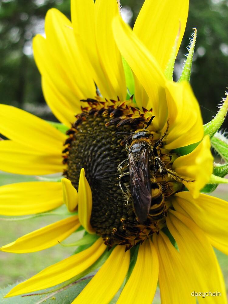 Bee by dazychain
