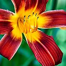 Star Flower by James Iorfida
