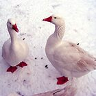 December Snow Geese  by Chigginsamy