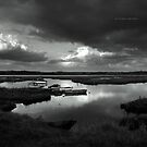 """"""" Lost In The Marshes """" by Richard Couchman"""