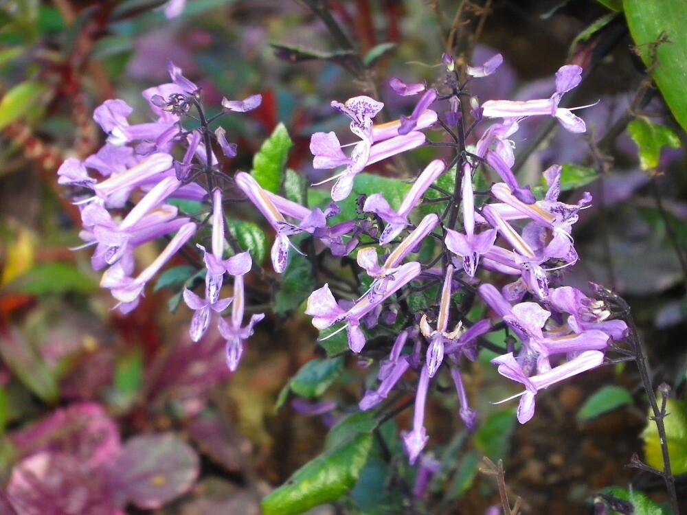 Violet Flowers by amazingcat