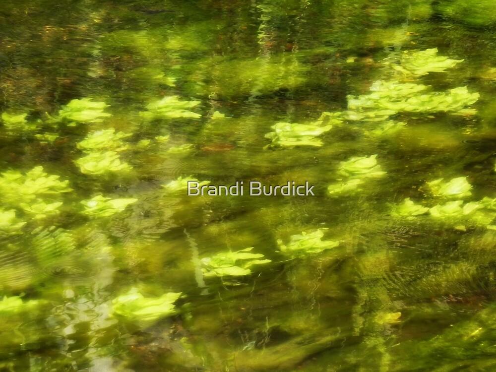 wind blowing by~ by Brandi Burdick