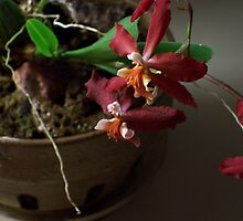 Potted Orchid by Bernie Garland