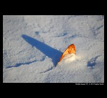 Dry Golden Leaf Stuck In Snow  by © Sophie W. Smith