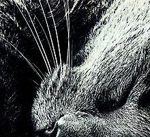 Cat Nap by Karen Lewis