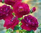 Red Roses at Sunset by RC deWinter